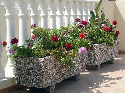 plantas-terraço