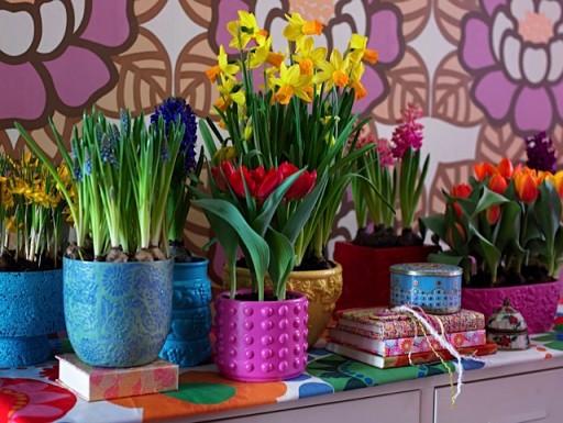 vasos-plantas-coloridas