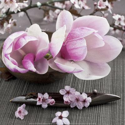 Decora o com plantas magn lia - Magnolia planta cuidados ...