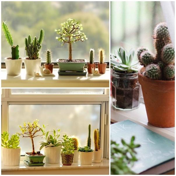 decoração-plantas