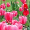 Decoração com plantas: plantação de bulbosas