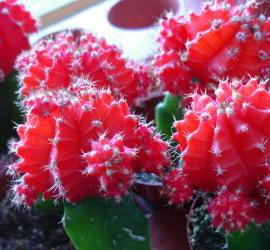 Decoração com plantas: Cactos e plantas suculentas